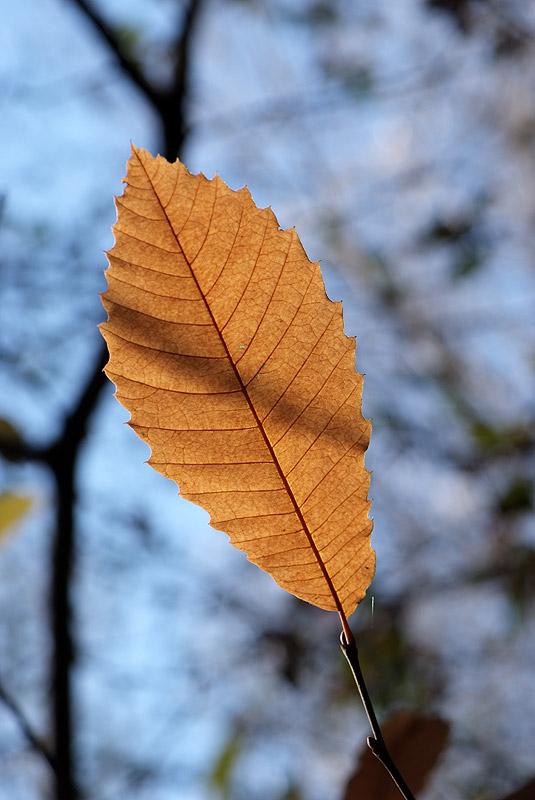 Dernière série d'automne (avant l'année prochaine) 221108_10