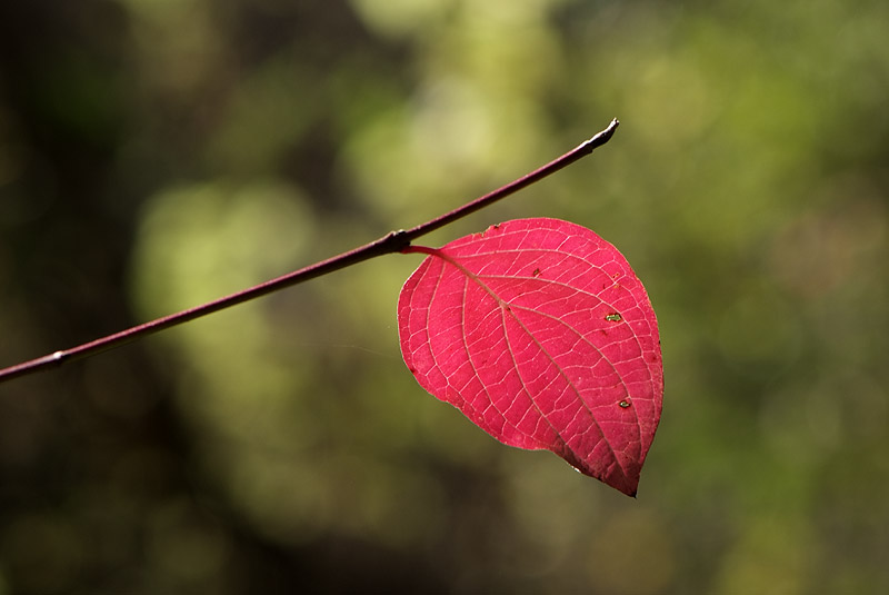Couleurs d'automne en Luberon Colorado_11_04