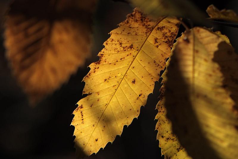 Couleurs d'automne en Luberon Colorado_11_08