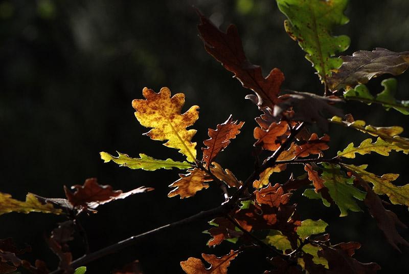 Couleurs d'automne en Luberon Colorado_11_15